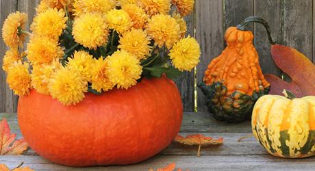 Make pumpkin planter - Pumpkin Decorating Tips