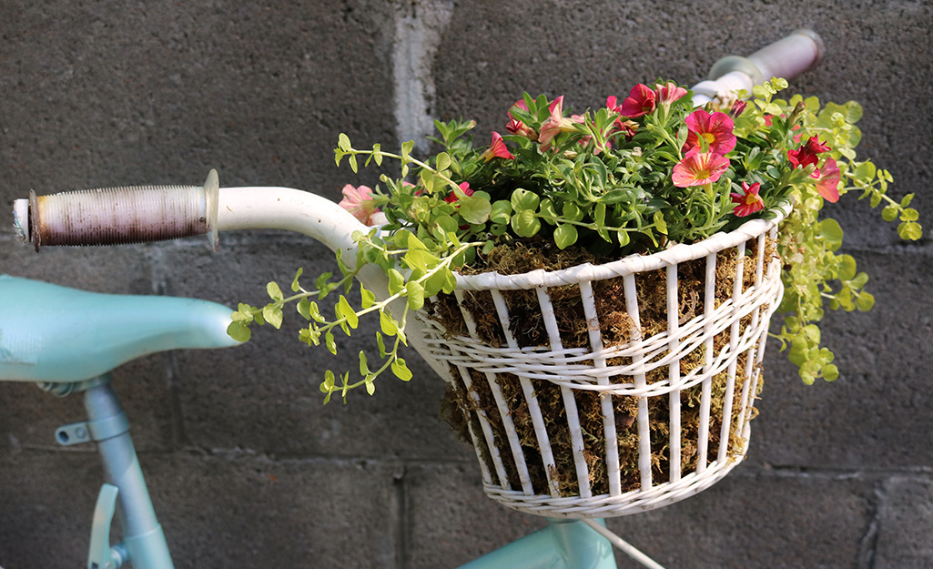 Bicycle basket filled with small flowers