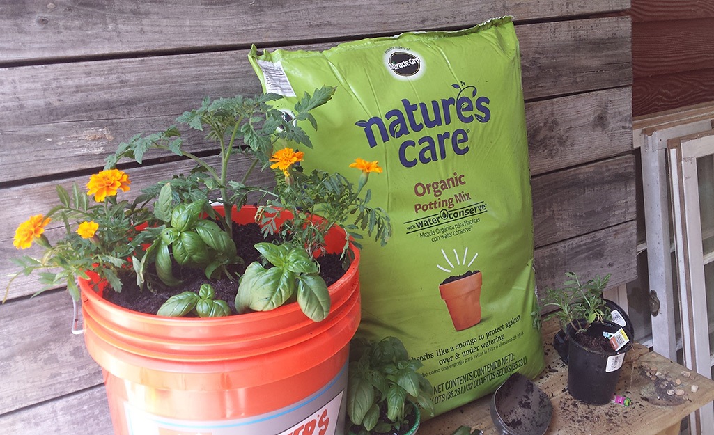 Tomato, basil and marigold plants in a Homer bucket