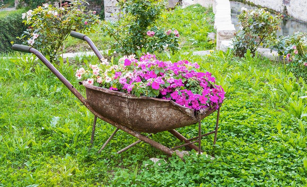 Rusty wheelbarrow planted with pink flowers