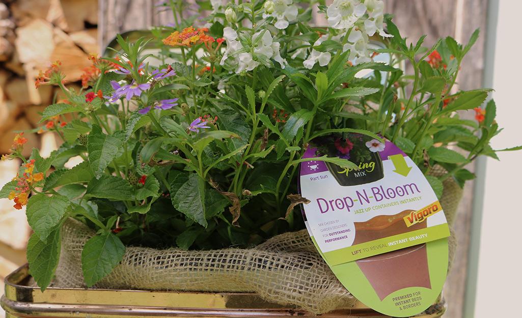 Drop-n-Bloom arrangement of flowers