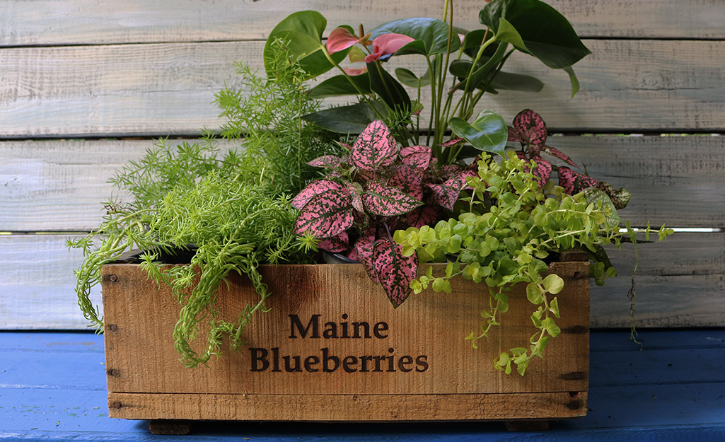 Wooden box filled with pink and green foliage