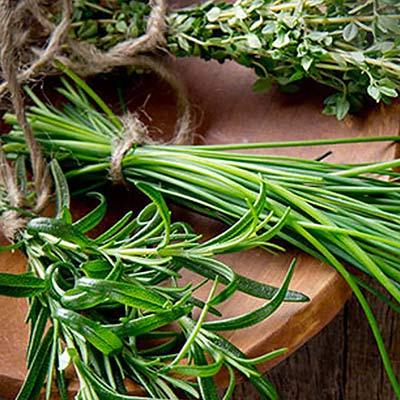 Savor Summer Year-Round By Harvesting Herbs Now
