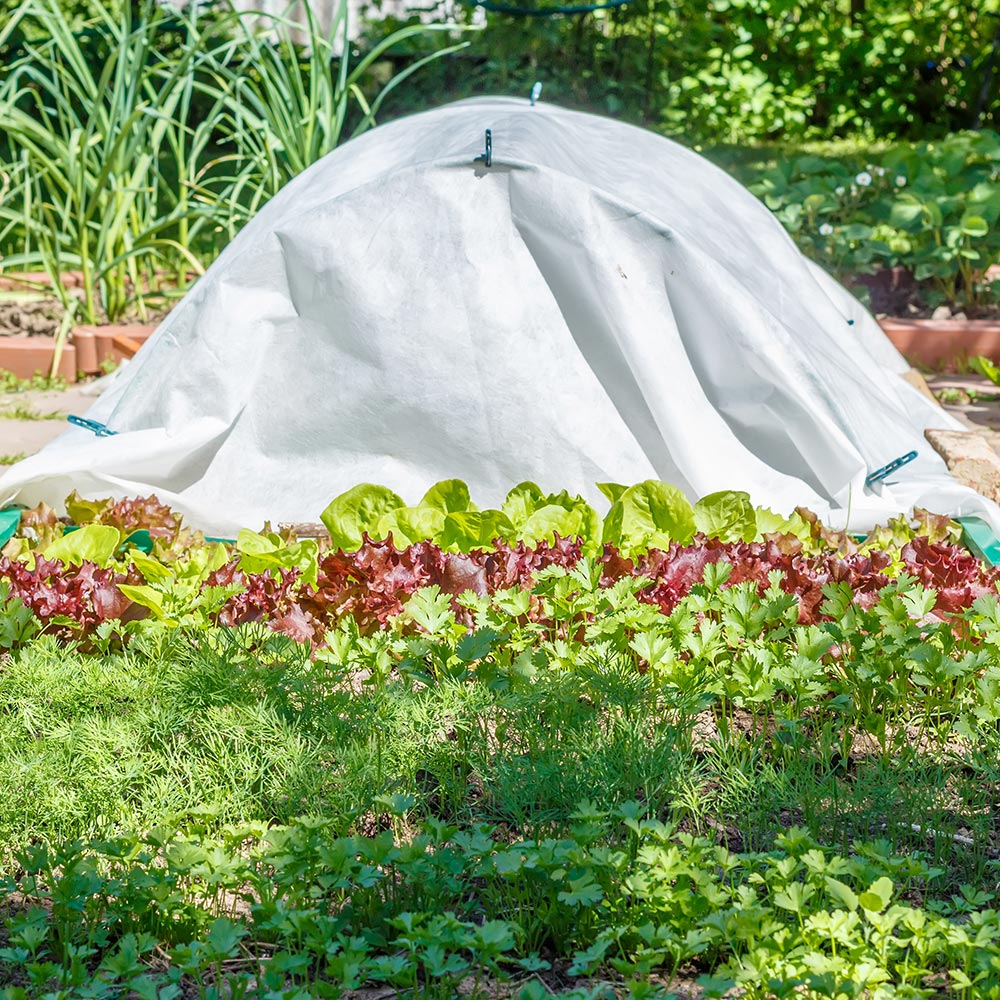 Row covers protect vegetables in the garden