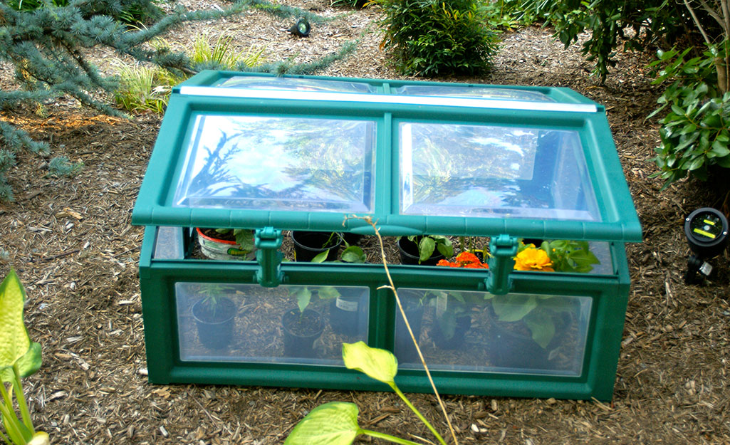 Cold frame protects vegetables