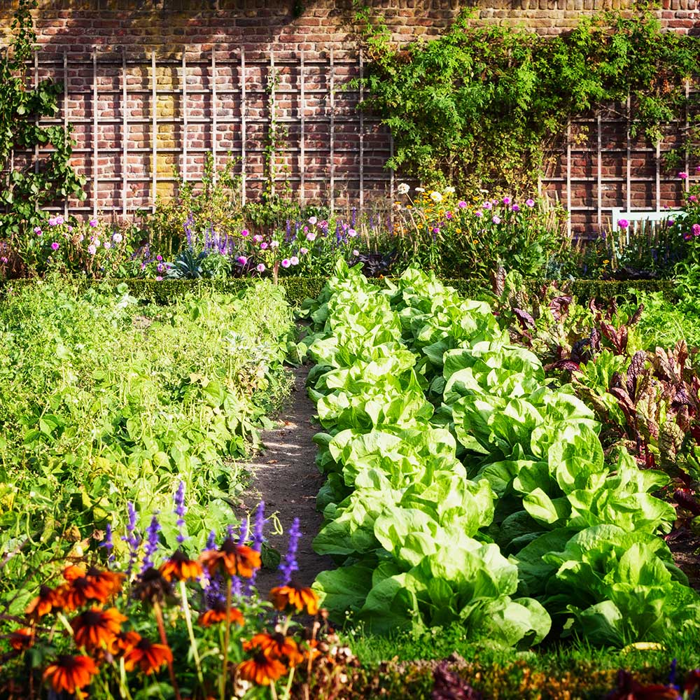 Vegetable and flower garden in summer