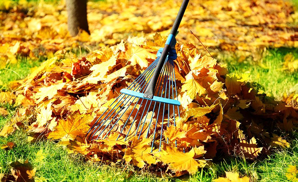 Raking leaves in fall
