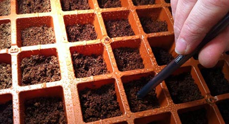 Drop in Seeds