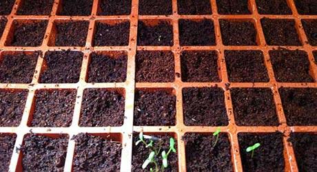 Monitor Seedlings
