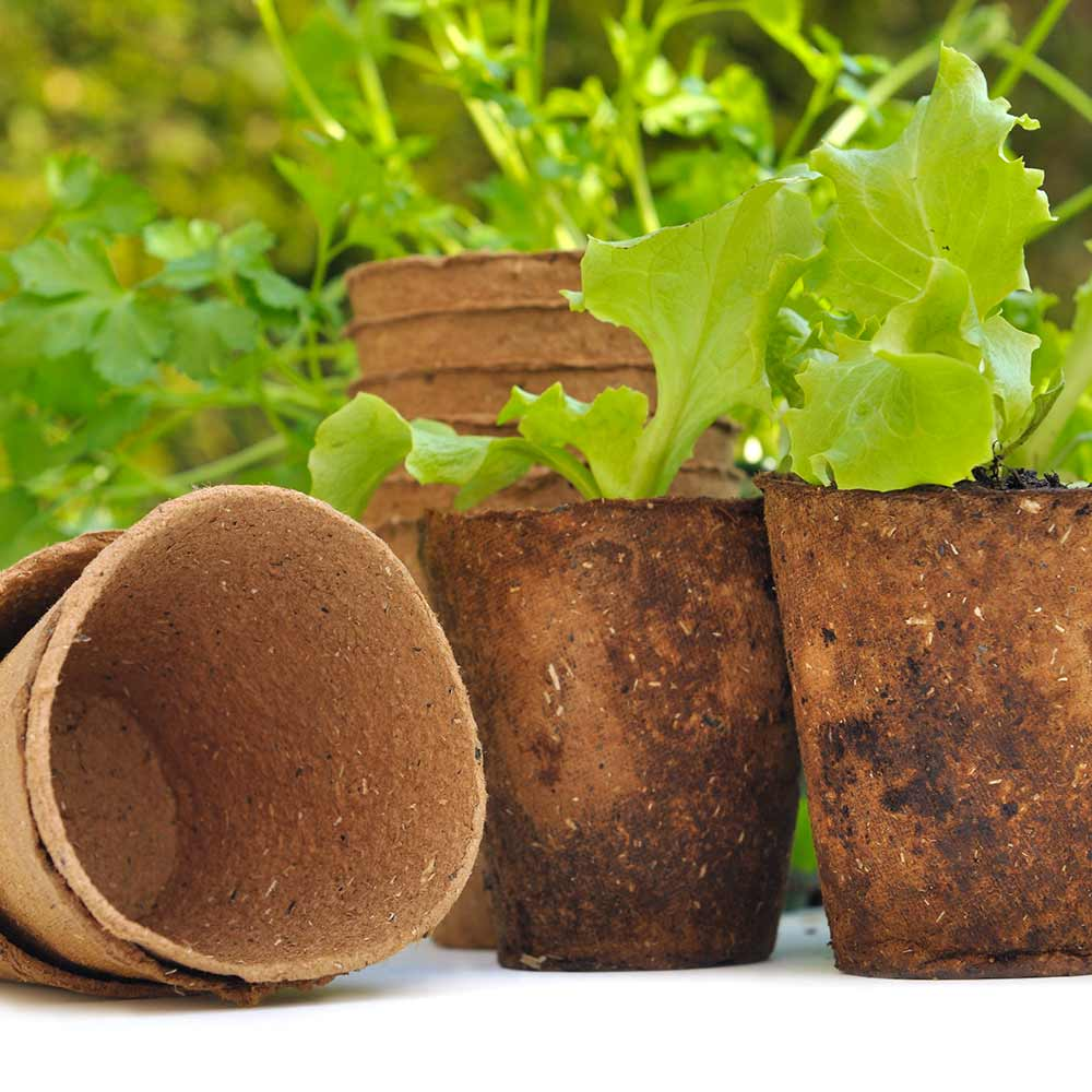 Start Seeds in Peat Pots for a Jump on Spring