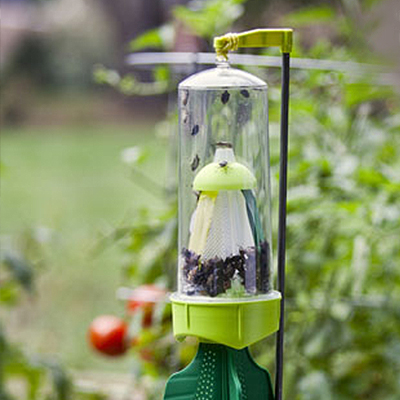 Don't Let Stink Bugs Ruin the Day – Set Out Traps Now