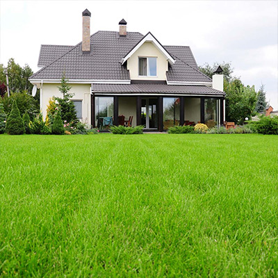 Tackle Weeds in Lawns Early in the Season