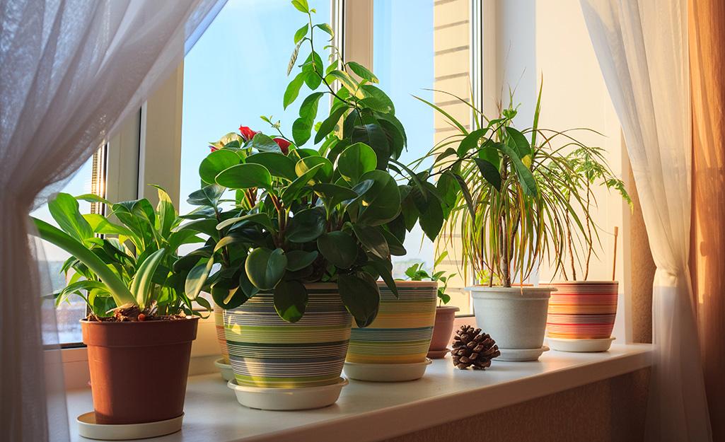 Người làm vườn ở các khu vực mùa đông ấm áp