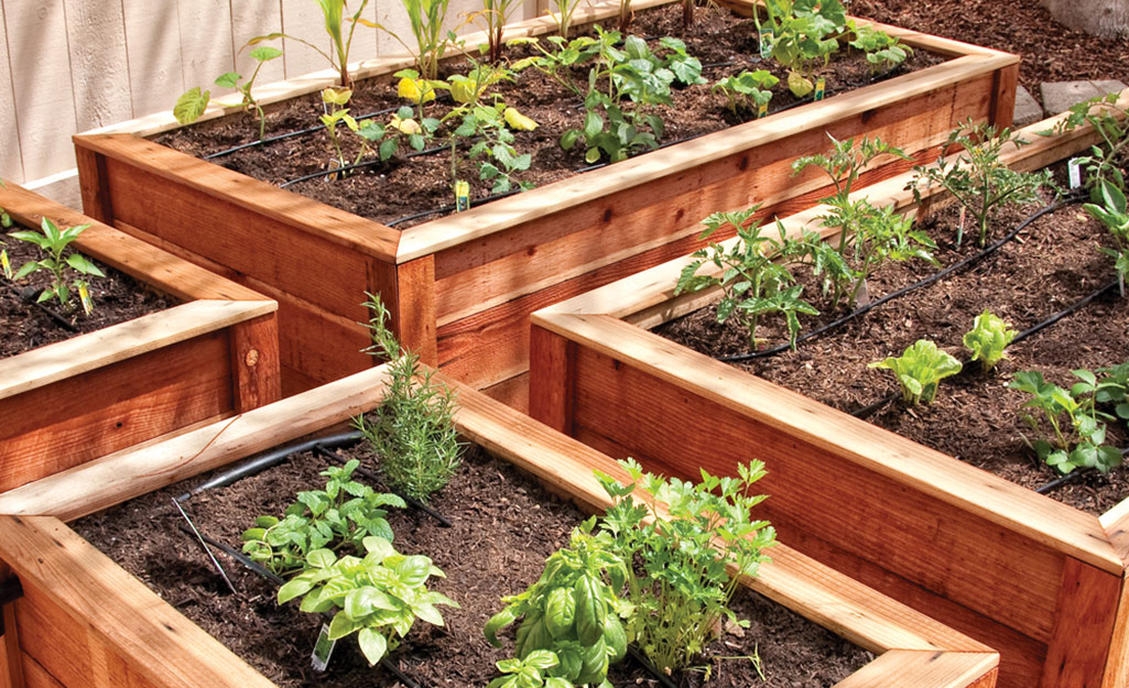 Raised garden beds with vegetables and drip irrigation