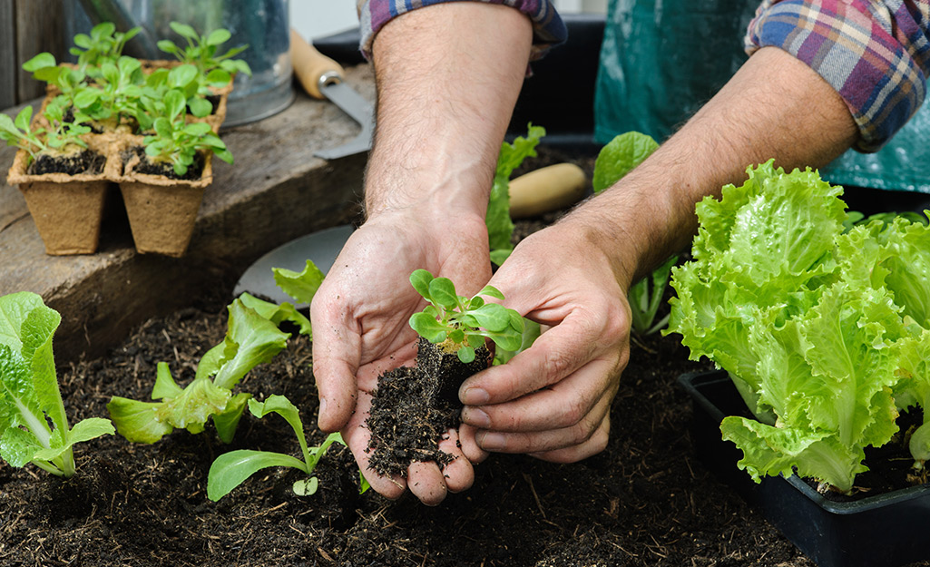 Why Plant a Fall Garden?