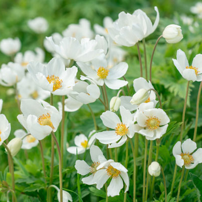 Top 5 Perennials for Sun