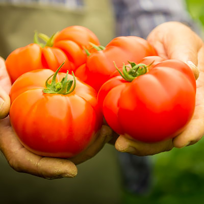 Top Tips for Growing the Best Tomatoes Ever