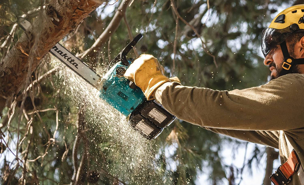 Man saws into a tree while wearing protective gear.