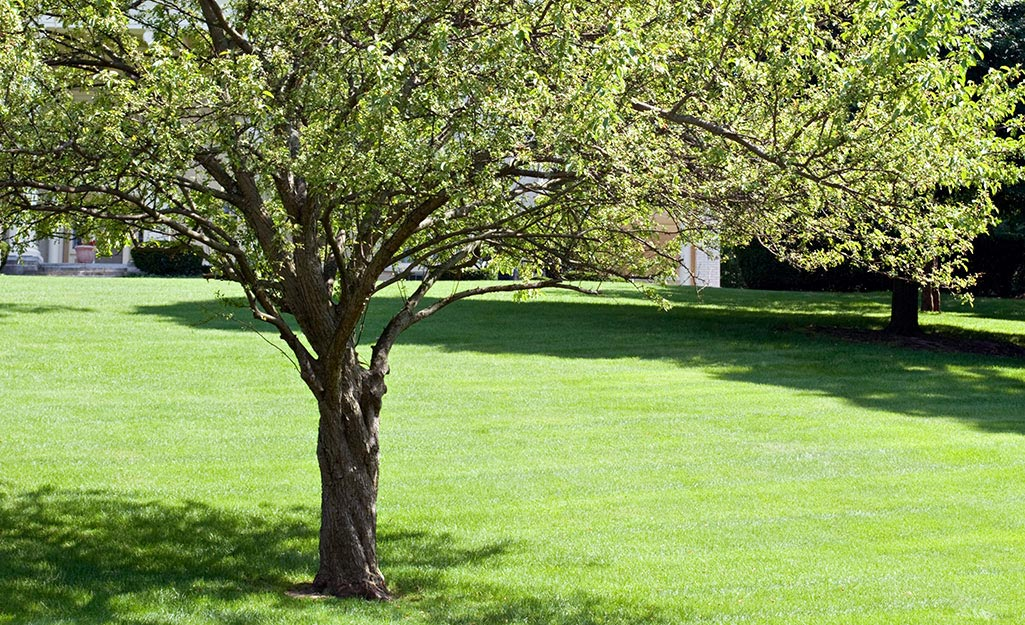 Tree sitting on open land.