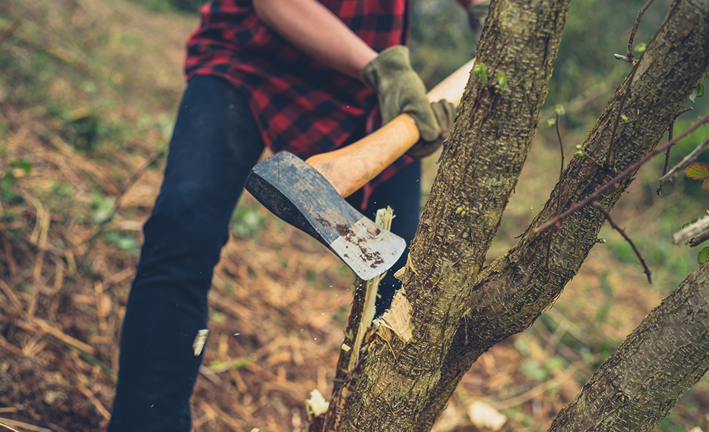 Man using an axe to cut into a tree.
