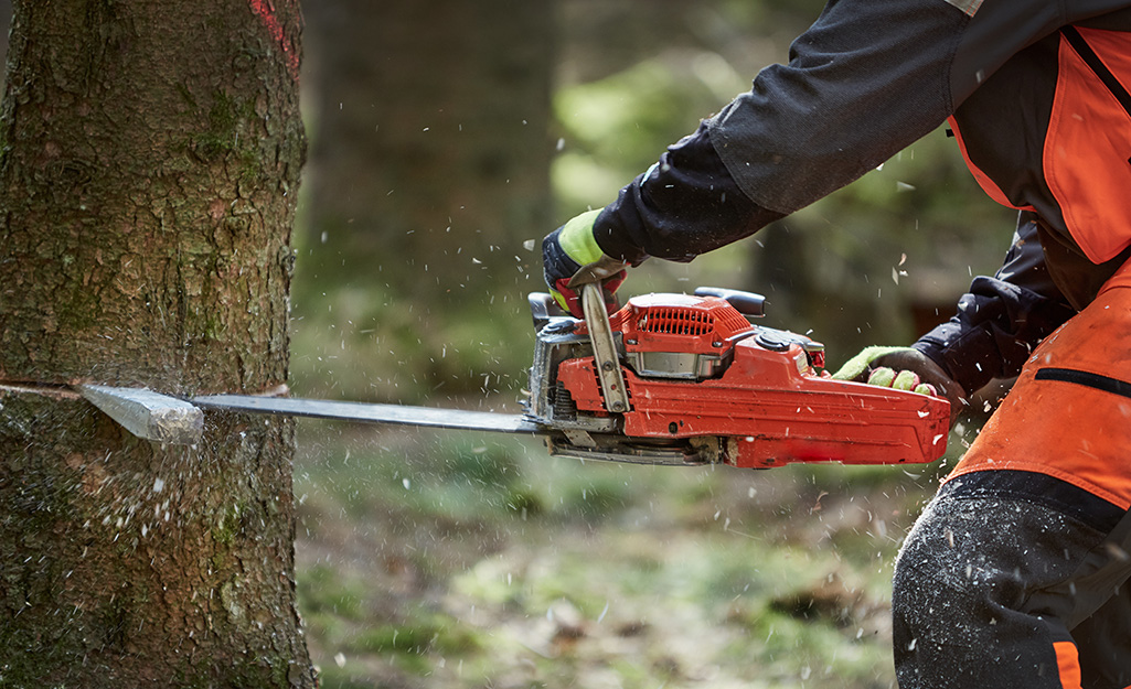 Individual using a saw to cut into a tree.
