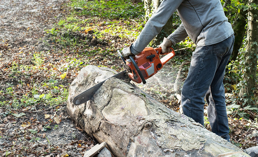 Man cutting up a felled tree into pieces.