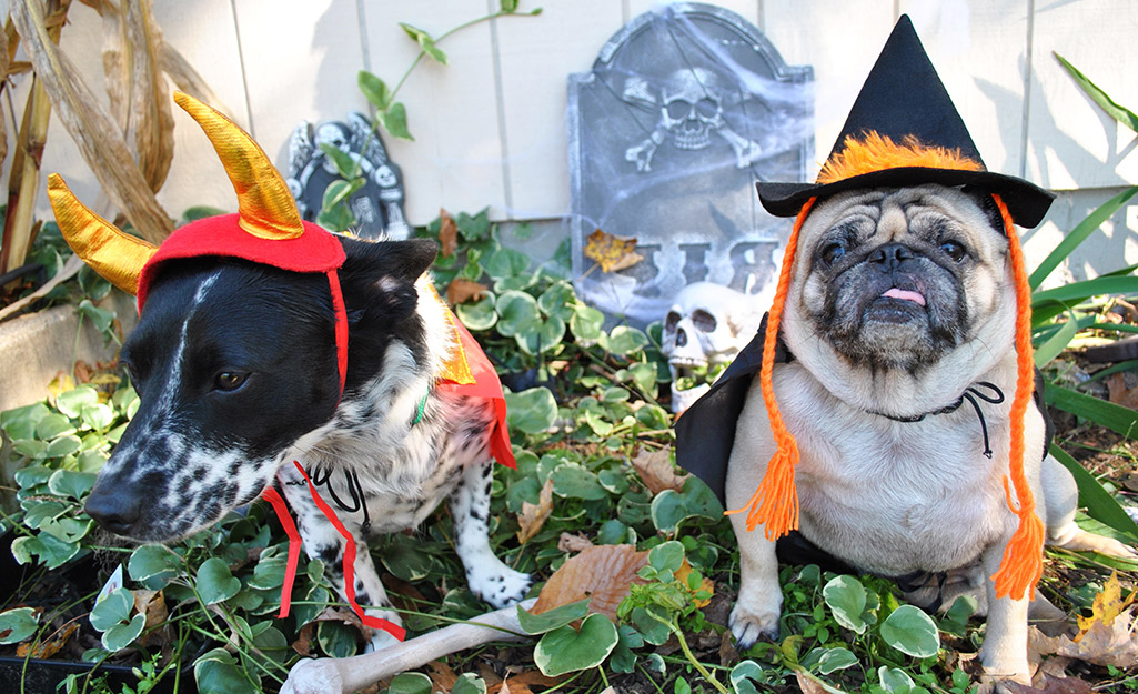 Two dogs in Halloween hats sit in a yard with creepy tombstones.