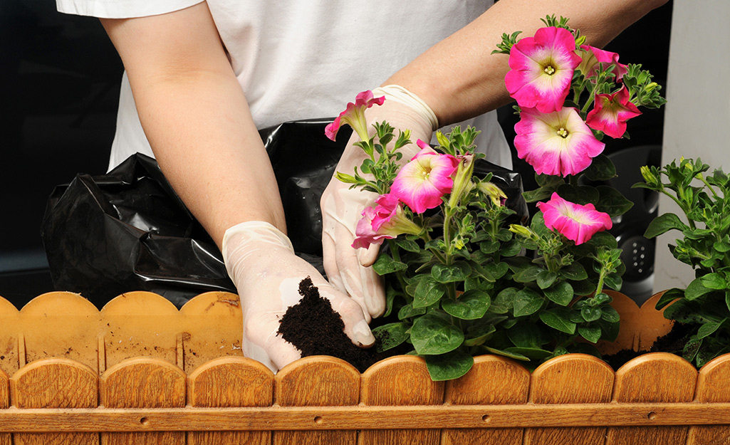 A gardener planting petunias in a container.