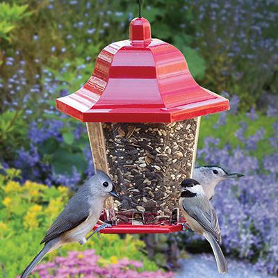 Wild birds sit on the rim of a bird feeder full of mixed bird seed