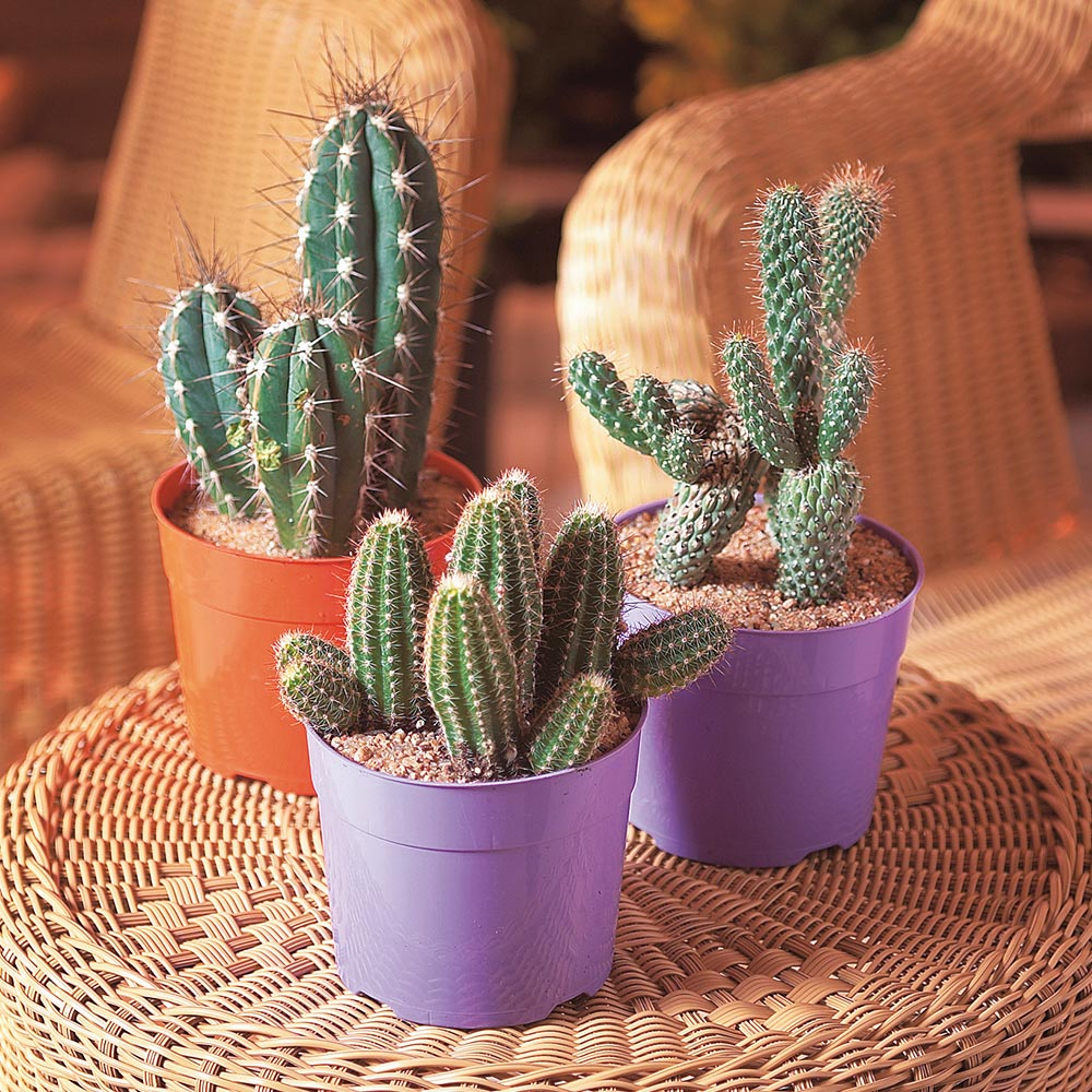 Types of Cactus Plants - The Home Depot