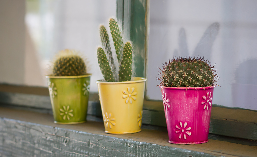 Cactus plants in green, yellow and pink decorative pots.