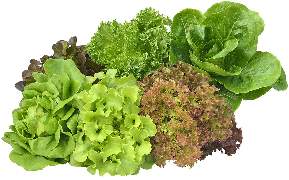 Types of Lettuce - The Home Depot