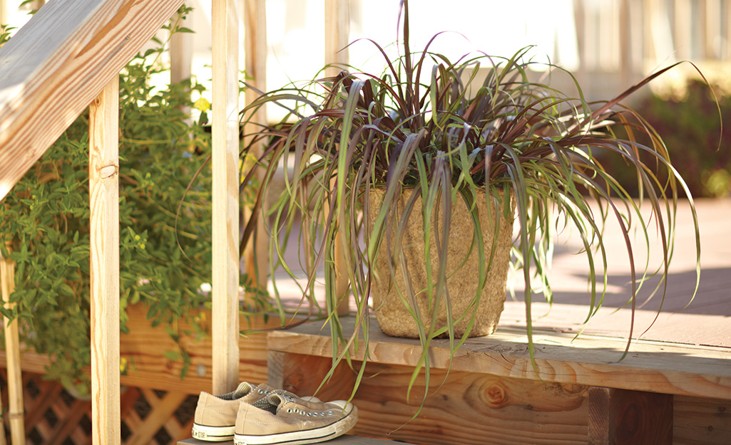 Ornamental grass in a container on a porch