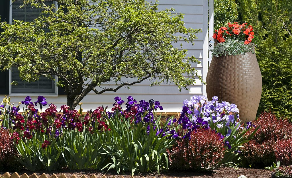 A brown rain barrel with orange flowers planted on top beside a white house and a flower bed.