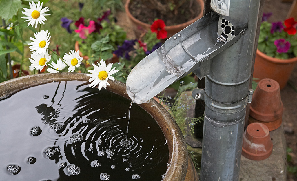 Water flowing from a downspout into a rain barrel beside assorted flowers.