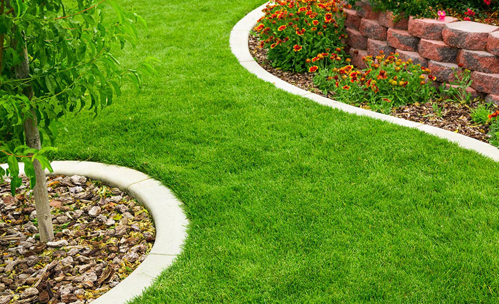 A lush green lawn grown from sod is edged with white border stones.