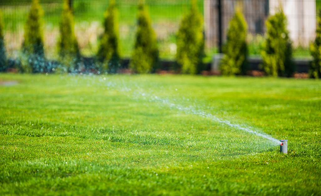 A sprinkler waters a bright green lawn grown from sod.