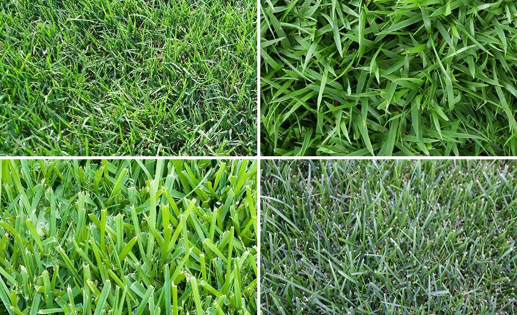 Four types of sod, clockwise from top left: Bermuda grass, centipede grass, blue grass, St. Augustine grass