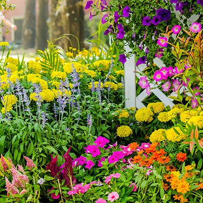 Different types of spring flowers in bright colors beside a white fence.