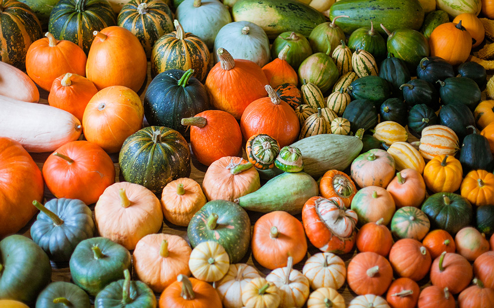 A variety of winter squash.