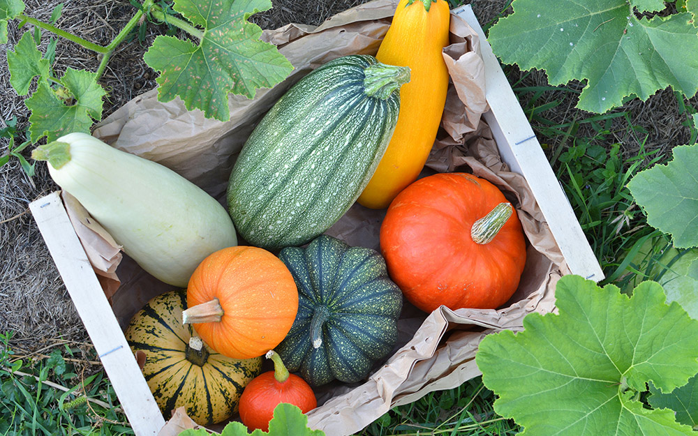 A box of summer and winter squash.