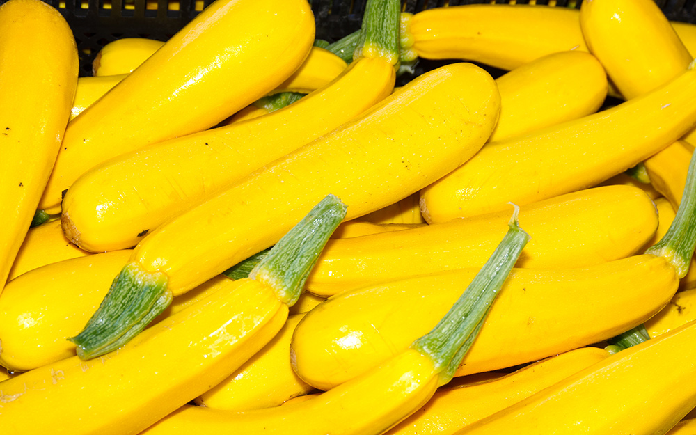 A pile of yellow squash.