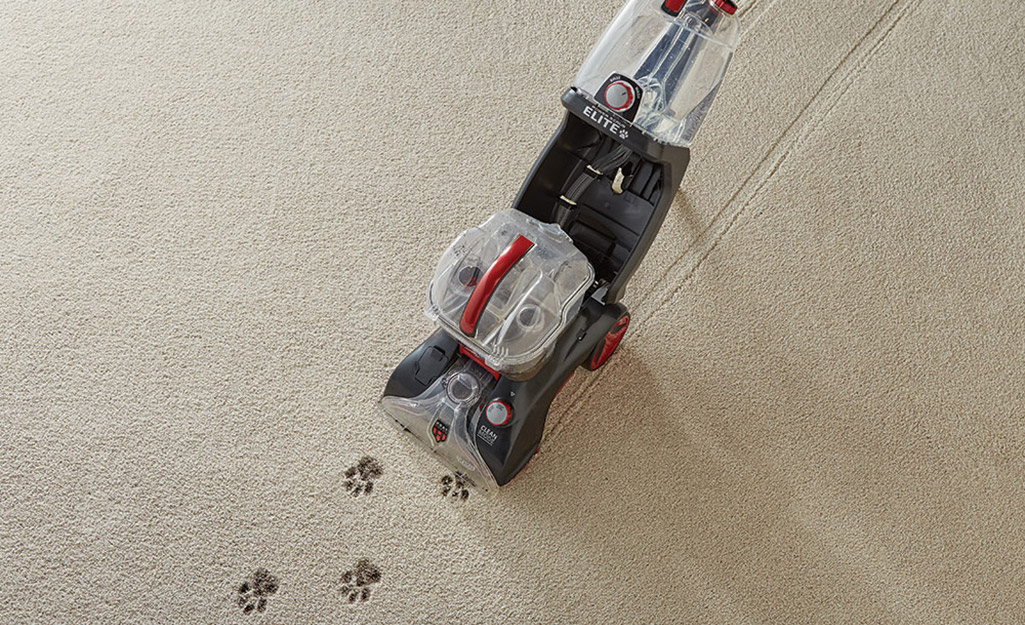 A carpet cleaner being pushed along the carpet to clean up muddy pawprints.