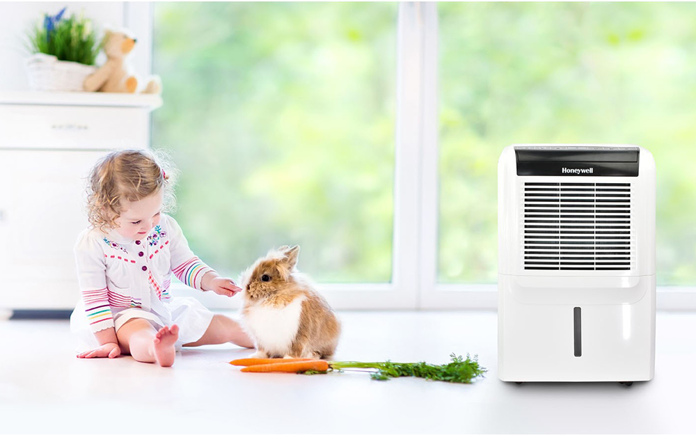 A girl and a pet rabbit play in a room near a dehumidifier.