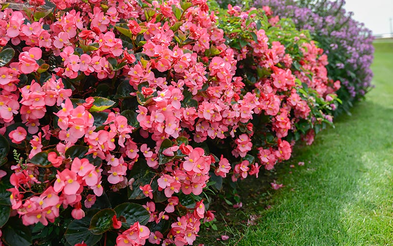 Companion Plants to Throw into the Mix Include: