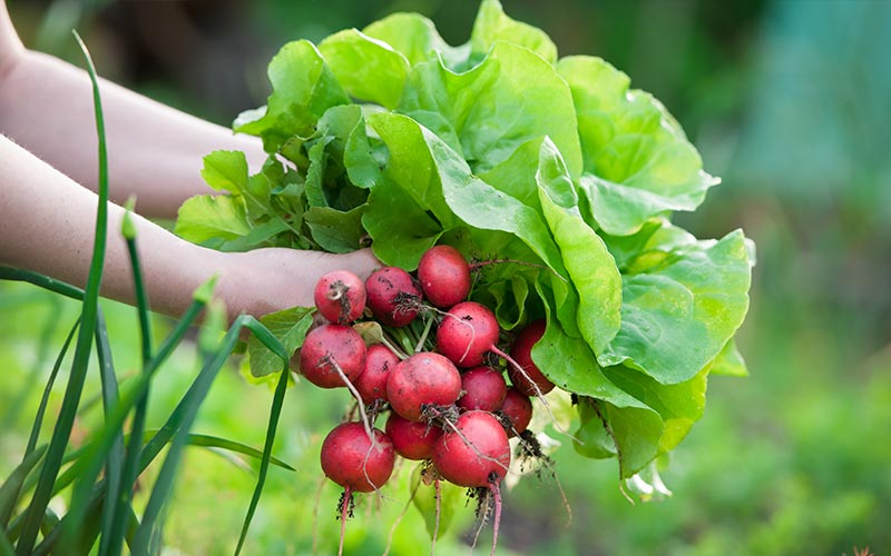 Fall Gardening Means Fewer Bugs