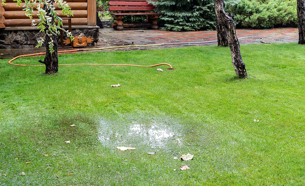 Standing water in a yard.