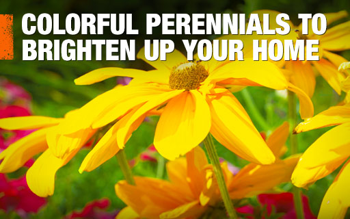 Perennial plants flowers at the home depot colorful perennials mightylinksfo
