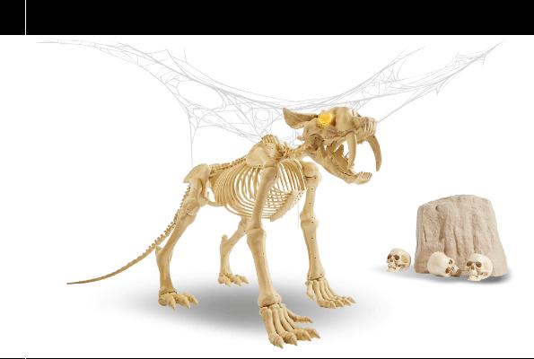 Saber toothed tiger skeleton bones