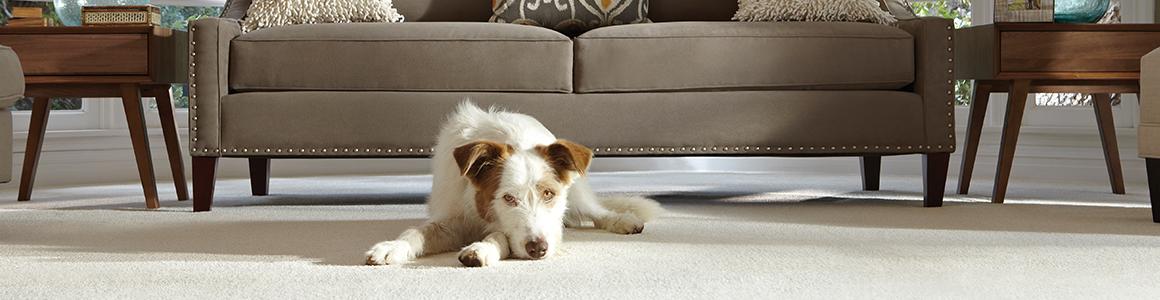 Free All Inclusive Carpet Installation